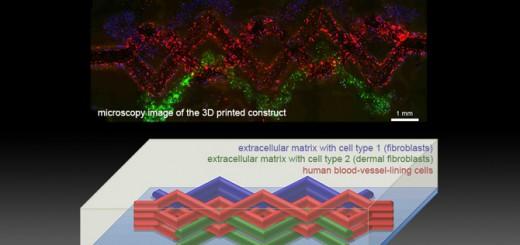 5_Figure 4_WEAVE Structure_5