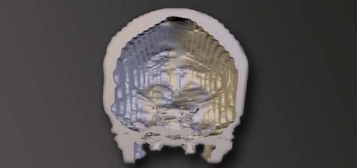 3dmodel of skull