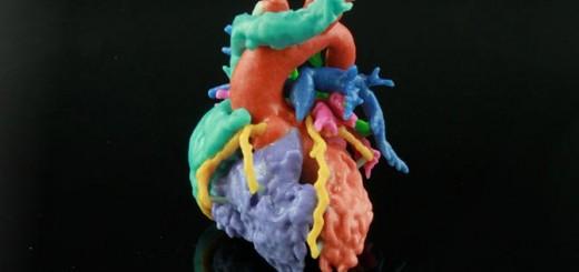 Materialise-heart-models