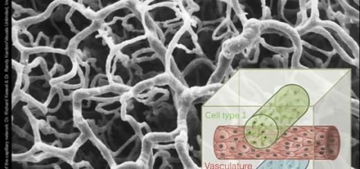 bioprinting-printing-living-tissue-1