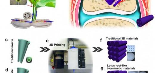 Lotus Root-Like Biomimetic Materials 1