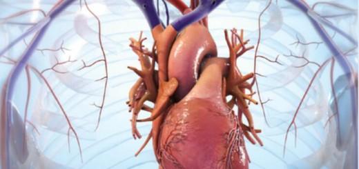 BIOLIFE4D heart regenerate