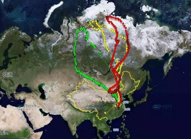 Huashu_Animal Tracker_5