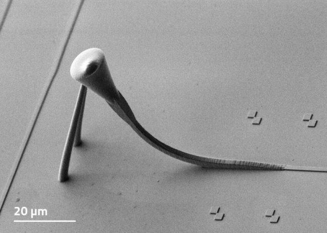 Nanoscribe_freeform-3D-fiber-to-chip